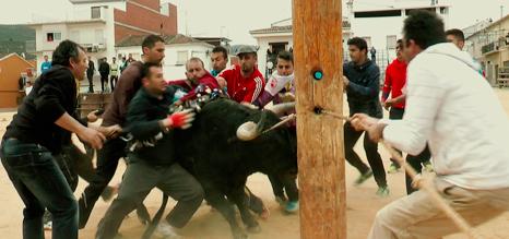 Ensogando un toro en Arroyo del Ojanco.